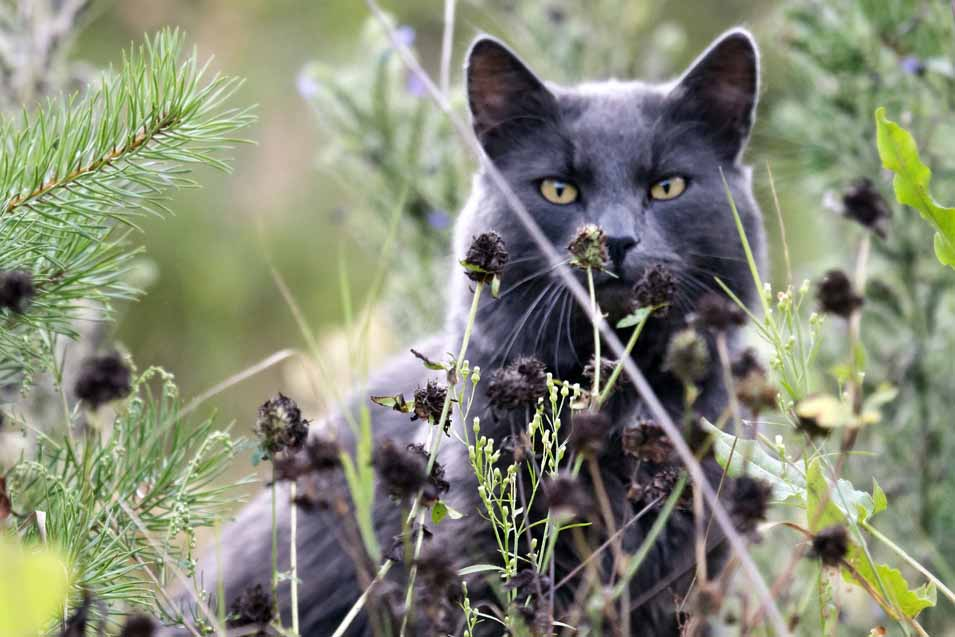 Picture of a wild cat