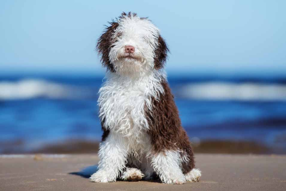 Picture of a young male dog on the beach
