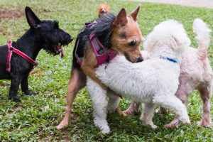 Picture of several dogs in a park