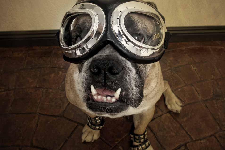 Dog wearing funny googles