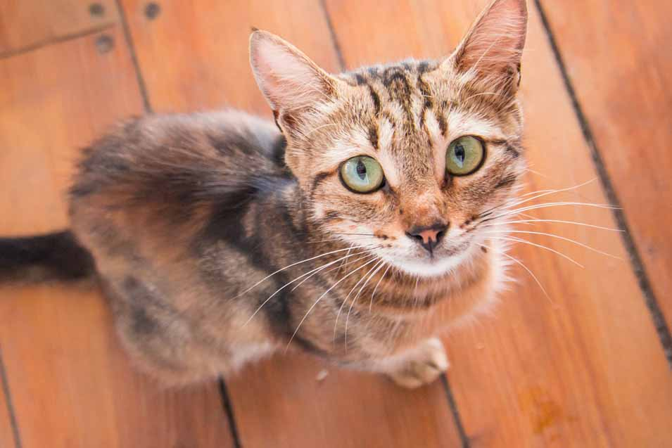 Symptoms that your Cat has Worms
