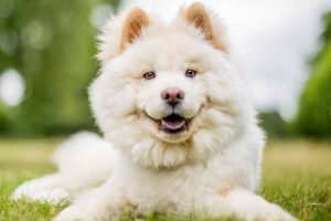 Picture of a Hairy Dog