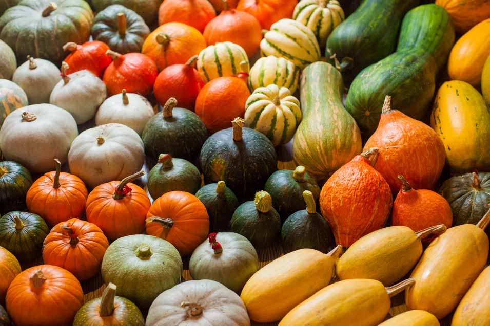 Picture of lots of squash