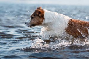 Picture of a dog in the water