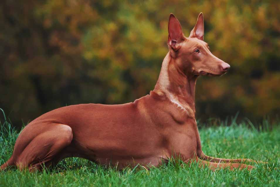 Picture of a dog laying down