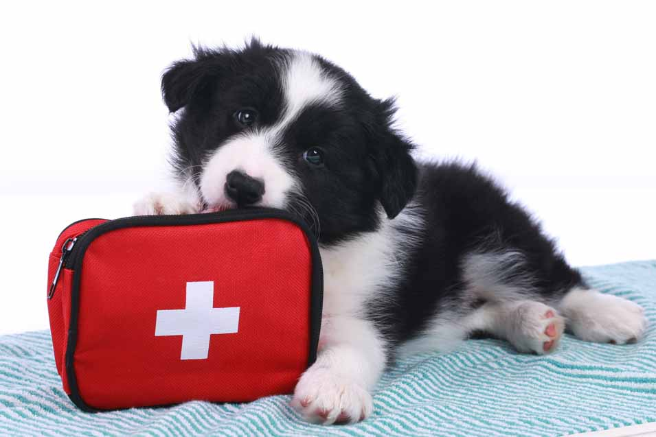 Picture of a dog with a first aid kit