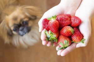 Picture of a dog and strawberries