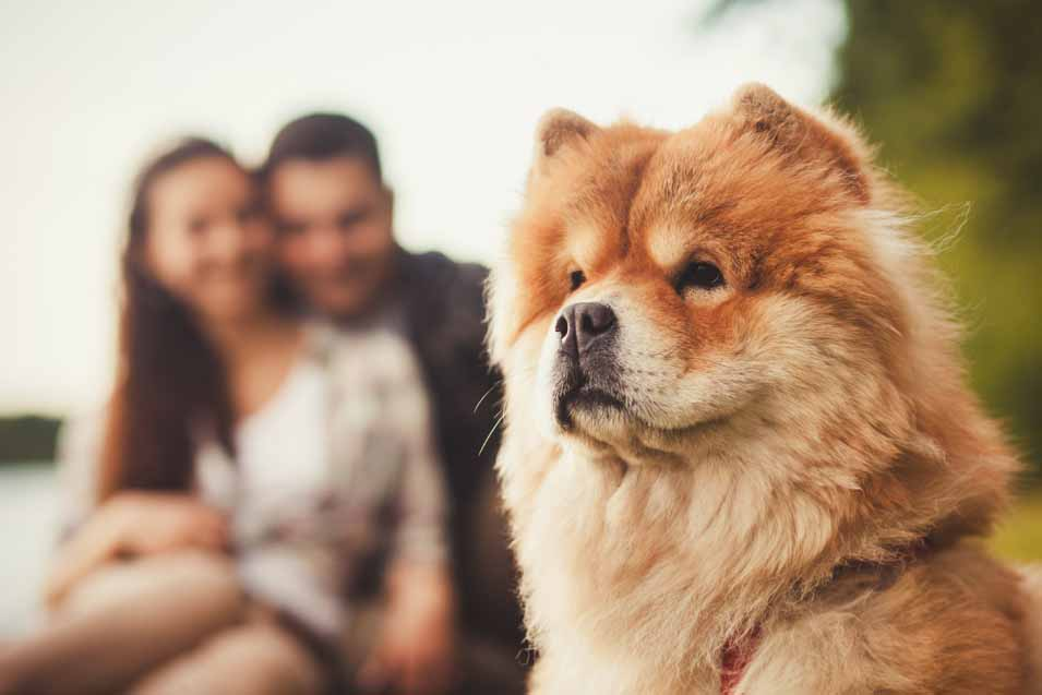 Picture of a dog and its owners