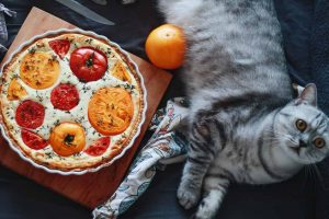 Picture of a cat and fresh and cooked Tomatoes