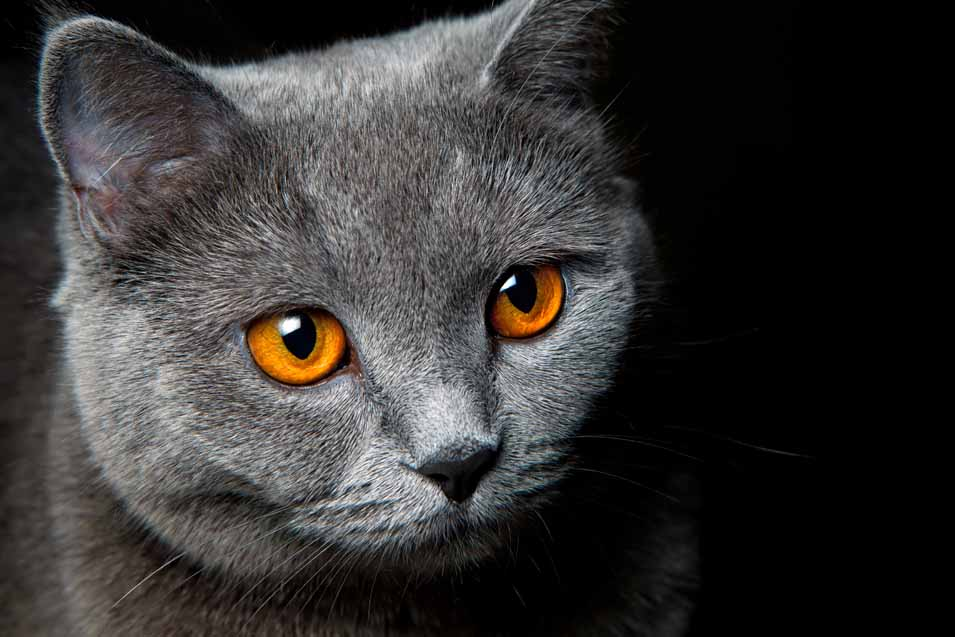 Picture of a cat with orange eyes