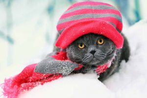 Cat wearing a winter hat in the snow