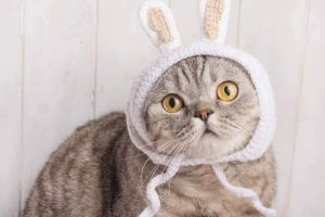 Cat wearing a bunny hat