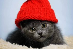 Cat wearing a red hat