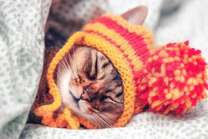 Cat wearing a knitted hat