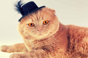 Cat wearing a small black hat