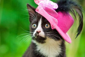 Cat wearing a pink hat