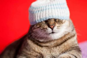 Cat wearing a hat covering its eyes