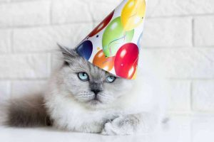 Cat wearing a birthday hat