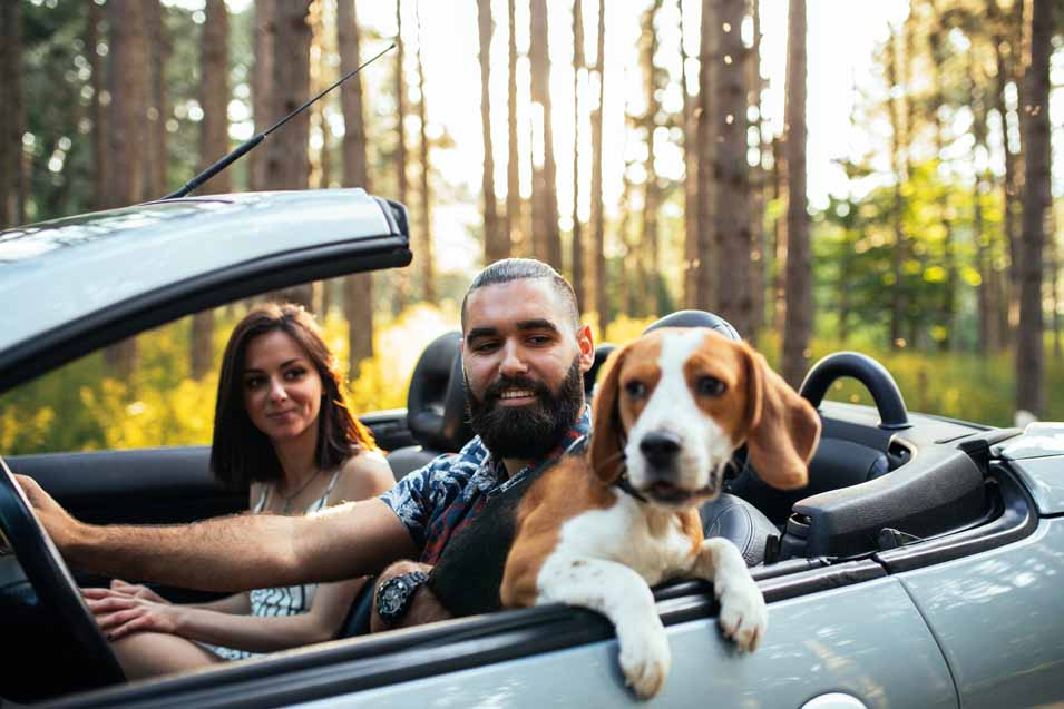 Picture of a dog with a family in the car