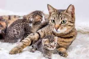 Picture of a female cat with kittens