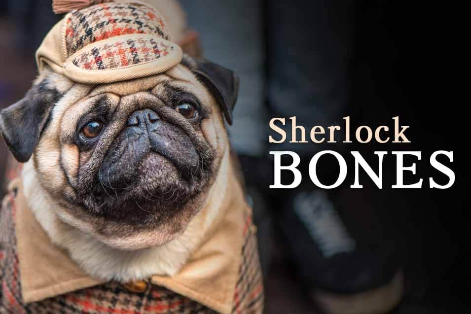 Picture of a dog dressed as Sherlock Holmes