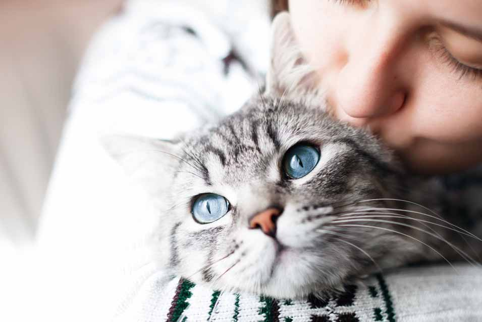 Picture of a grey tabby cat and a worman