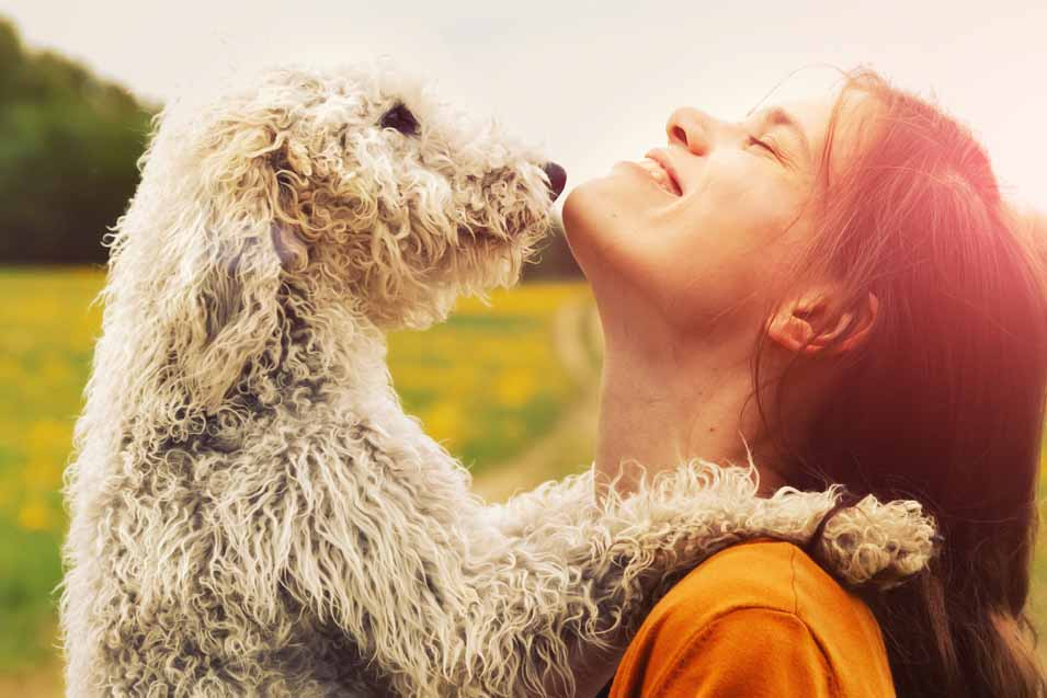 Picture of a woman holding a Bedlington Terrier