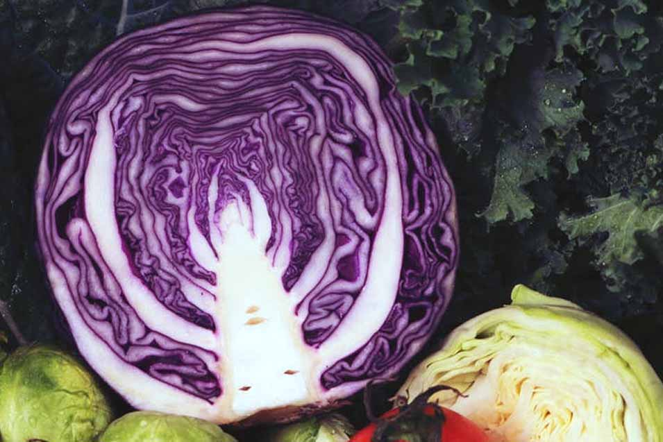 Picture of purple cabbage