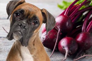 Picture of a dog and some beets
