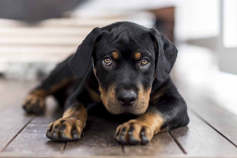 Picture of a sad looking dog