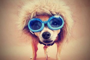 Picture of a funny dog wearing glasses