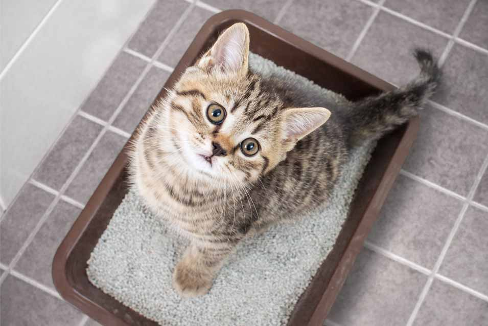 Picture of a cat in a litter box
