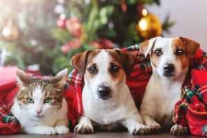 Picture of dogs a cat by Christmas Tree