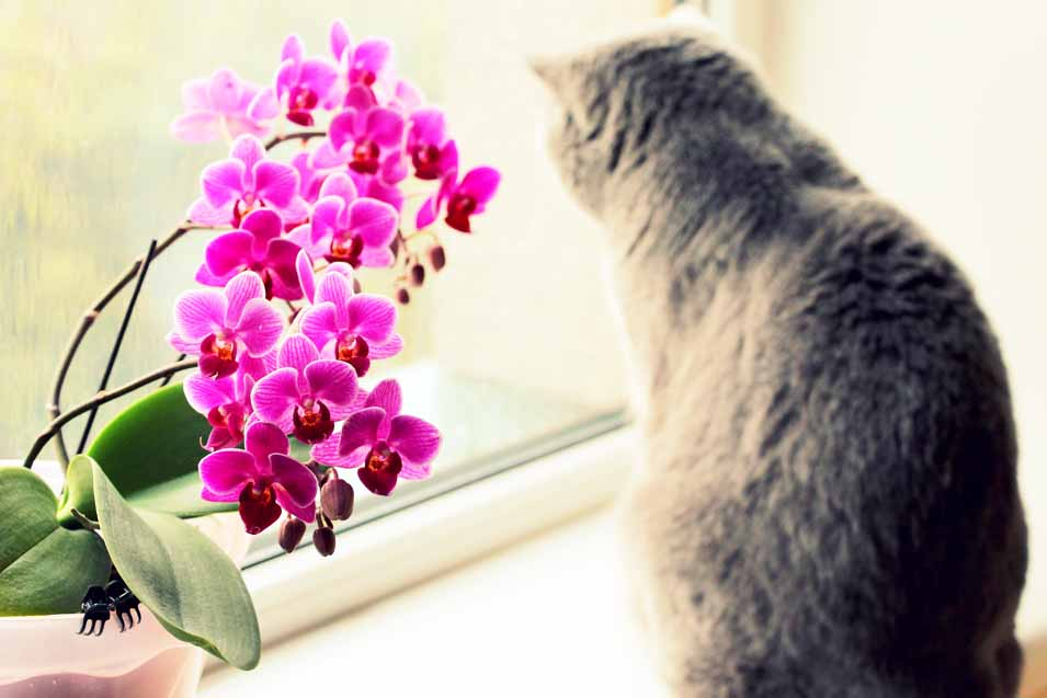 Picture of a grey cat by an orchid