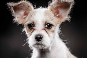 Picture of a young dog