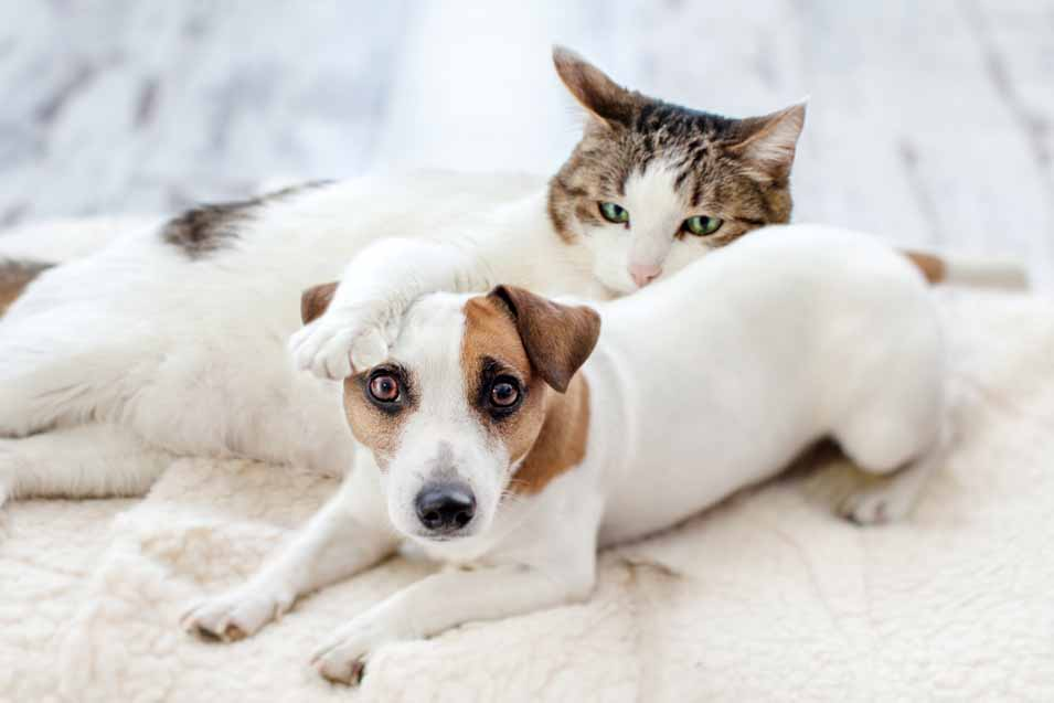 Picture of a dog and cat on a bed