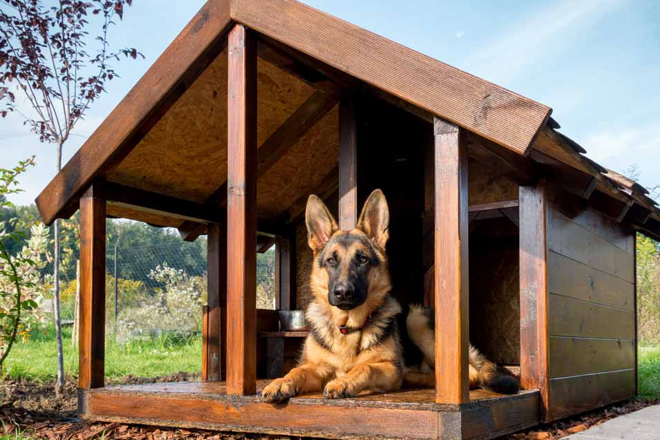 Dog laying in a dog house