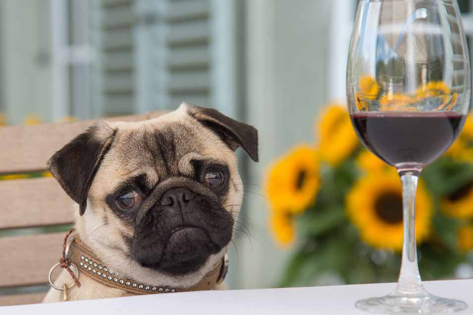 Picture of a dog and wine