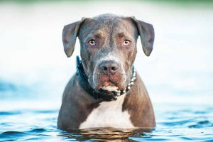 Picture of a dog sitting in the water