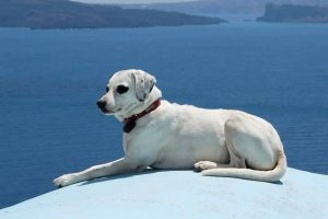 Picture of a dog in Greece