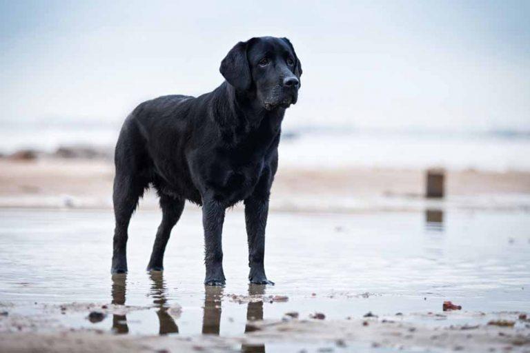 Picture of a dog at the beach