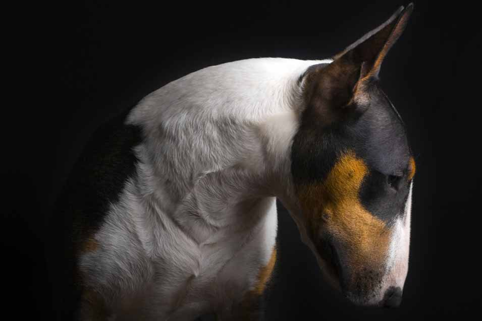 Picture of a dog with a black background