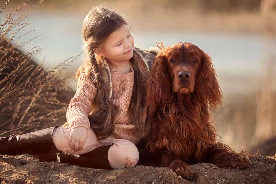 Picture of a Irish Setter and a Girl