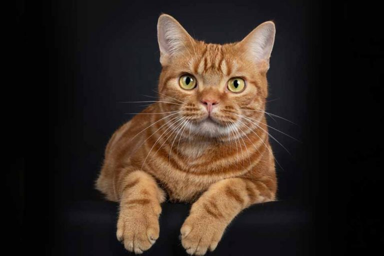 Picture of an orange cat