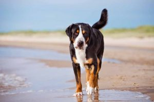 Picture of a dog walking on the beach