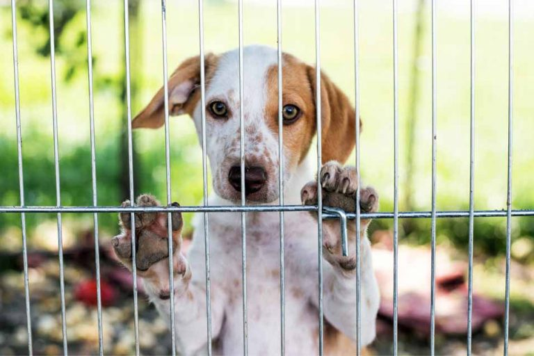 Picture of a dog outside in fenced area