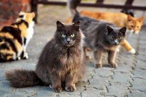 Picture of a group of 4 cats