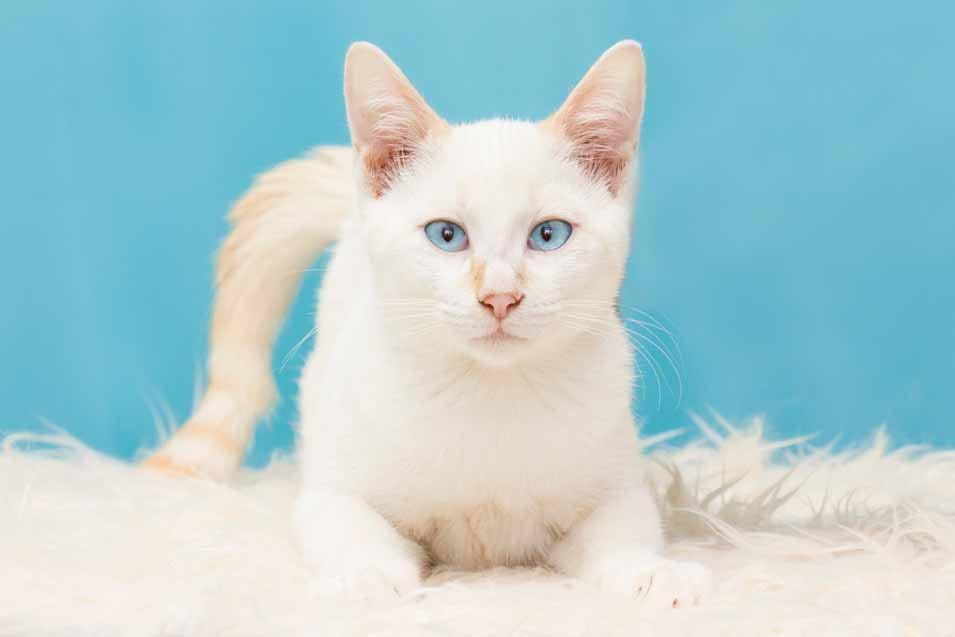 Picture of a white cat on a rug