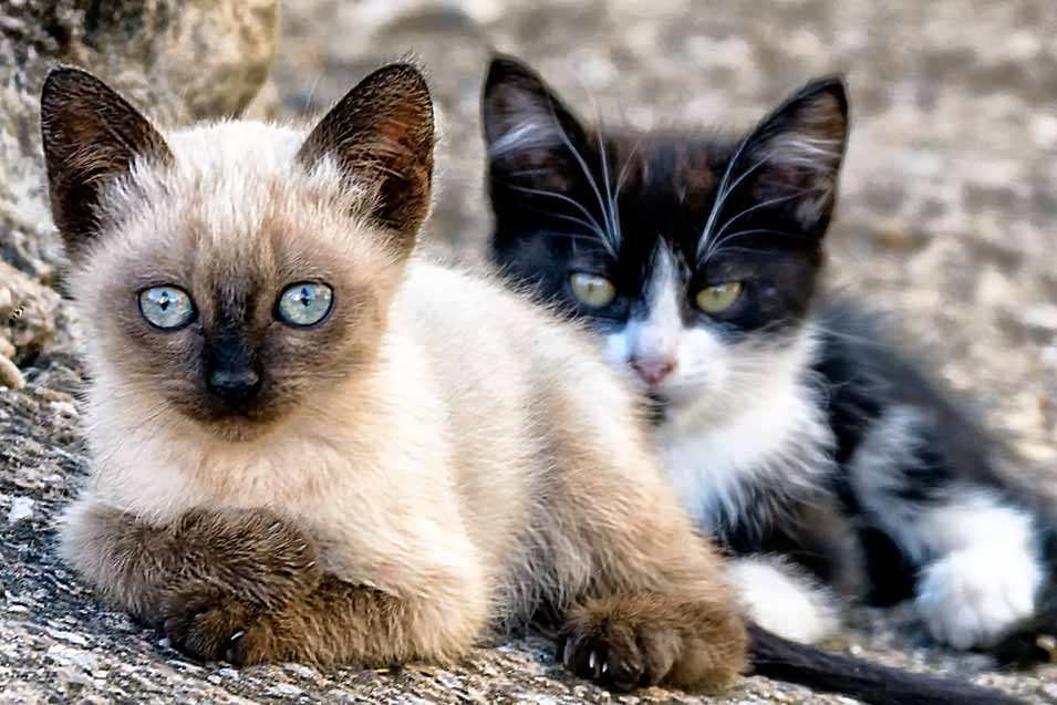Picture of 2 kittens