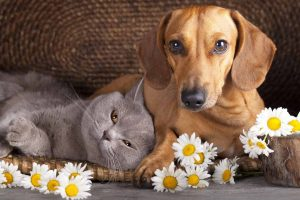 Picture of a dog and cat with flowers